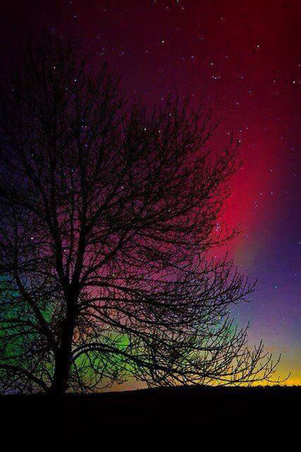 inkulte-couleurs-tree-night