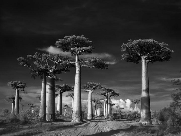 inkulte-ancient-trees-beth-moon-1