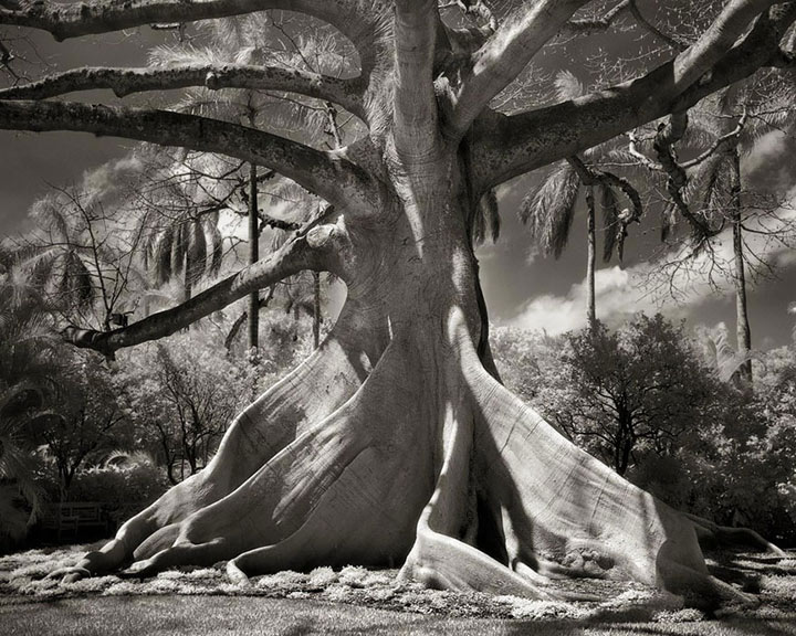 inkulte-ancient-trees-beth-moon-10