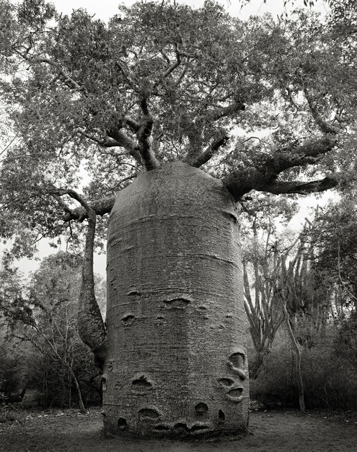 inkulte-ancient-trees-beth-moon-11