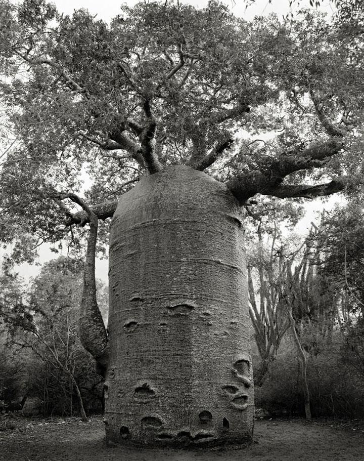 inkulte-ancient-trees-beth-moon-11