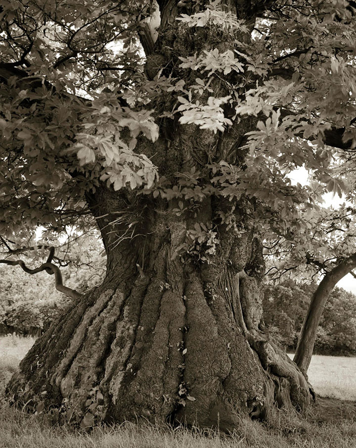 inkulte-ancient-trees-beth-moon-12