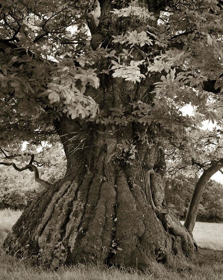 inkulte-ancient-trees-beth-moon-12