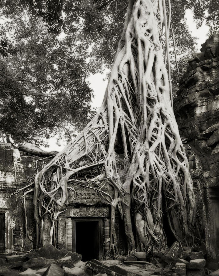 inkulte-ancient-trees-beth-moon-13
