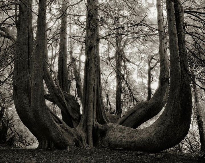 inkulte-ancient-trees-beth-moon-14