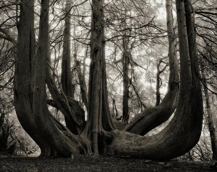 inkulte-ancient-trees-beth-moon-14