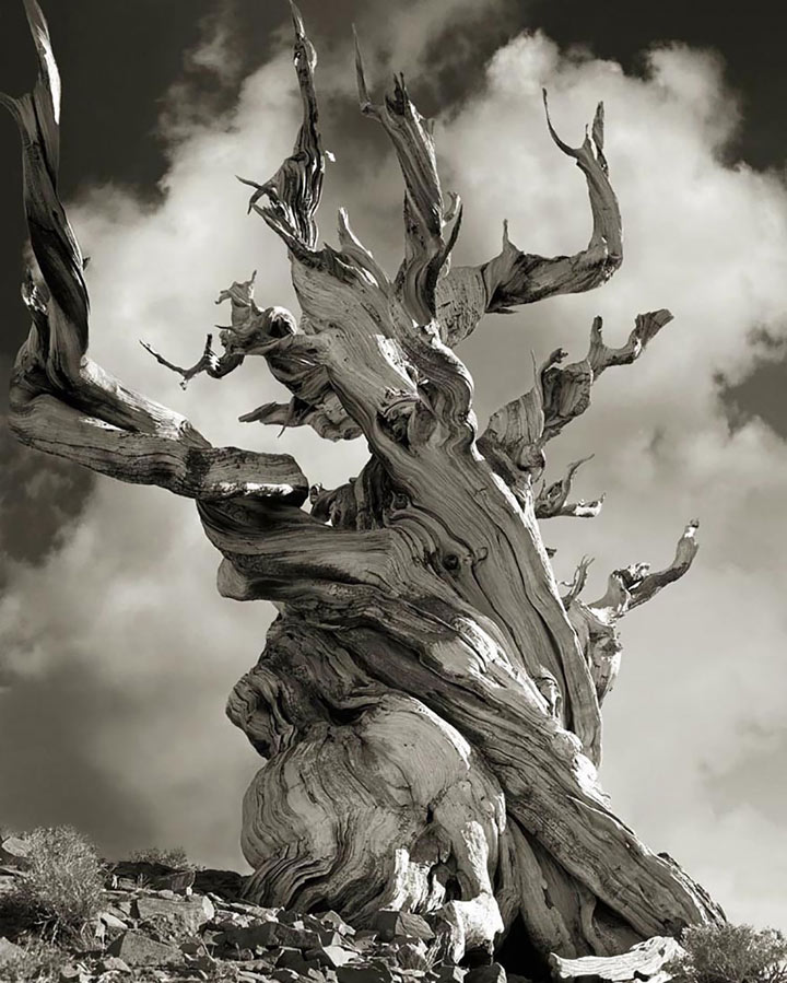 inkulte-ancient-trees-beth-moon-15
