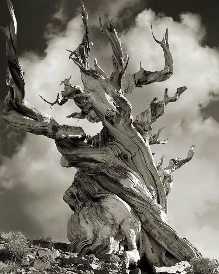 inkulte-ancient-trees-beth-moon-15