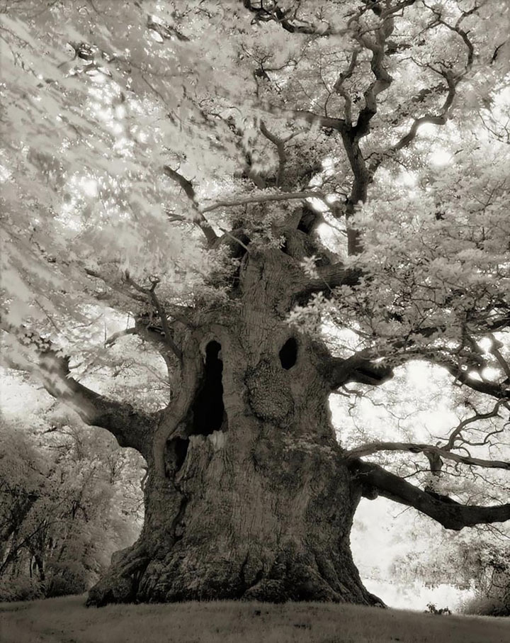 inkulte-ancient-trees-beth-moon-16