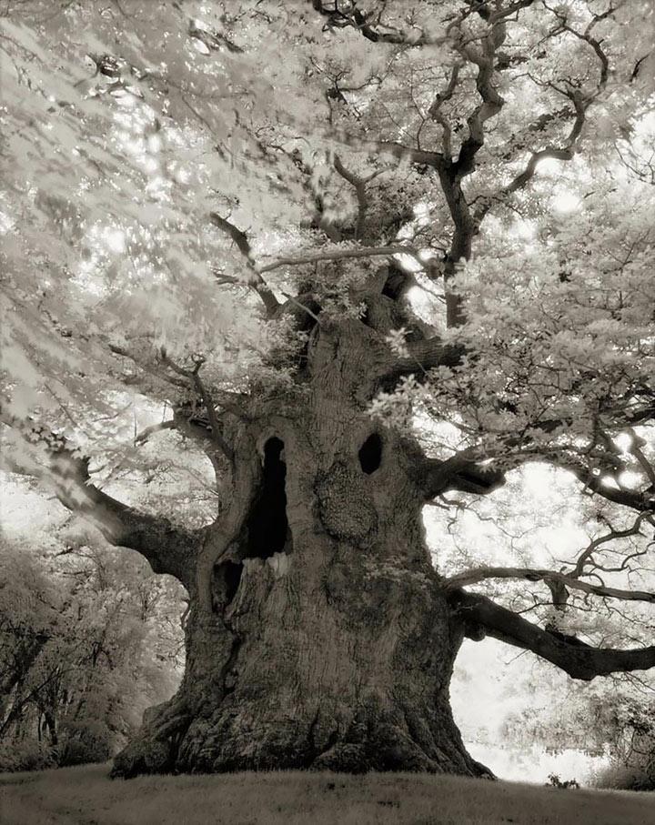 inkulte-ancient-trees-beth-moon-16