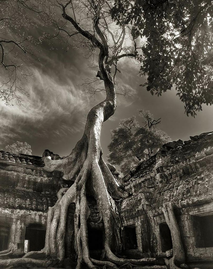 inkulte-ancient-trees-beth-moon-17