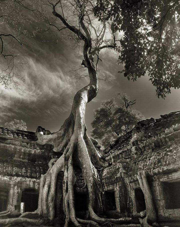 inkulte-ancient-trees-beth-moon-17