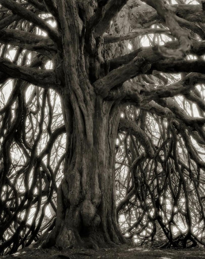 inkulte-ancient-trees-beth-moon-18
