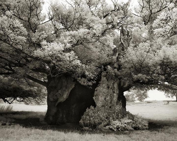 inkulte-ancient-trees-beth-moon-19