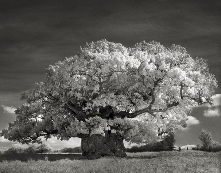 inkulte-ancient-trees-beth-moon-2