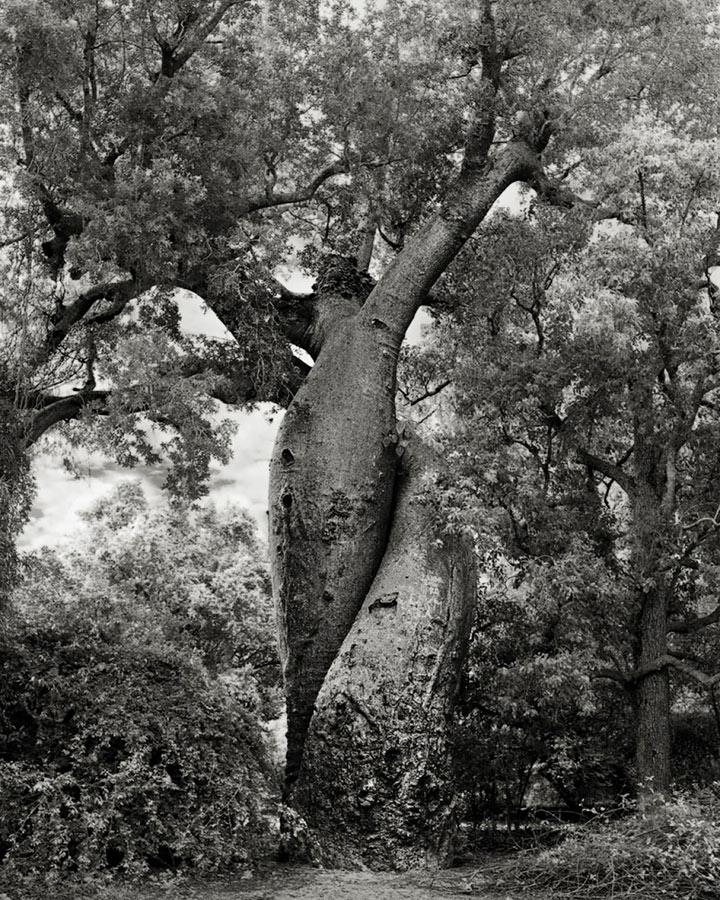 inkulte-ancient-trees-beth-moon-20