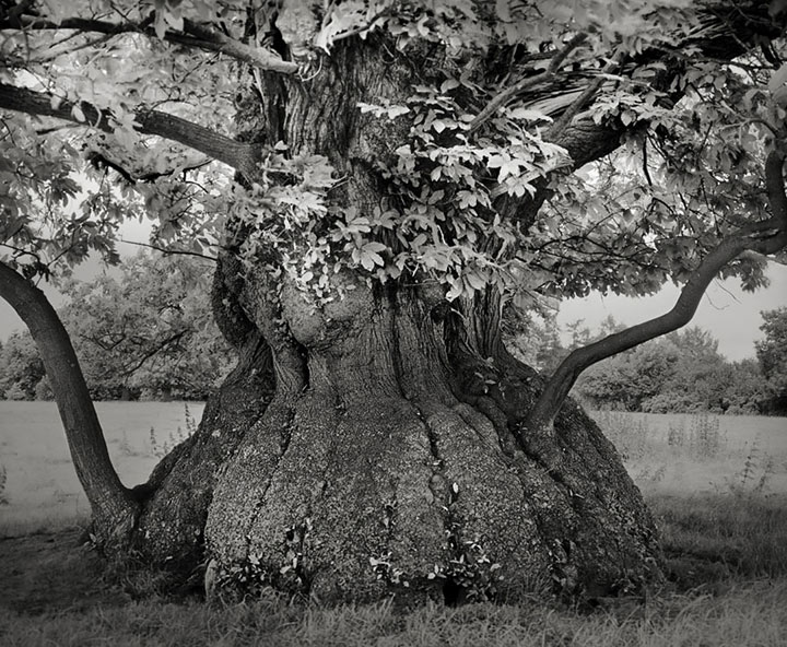 inkulte-ancient-trees-beth-moon-4