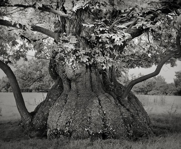 inkulte-ancient-trees-beth-moon-4