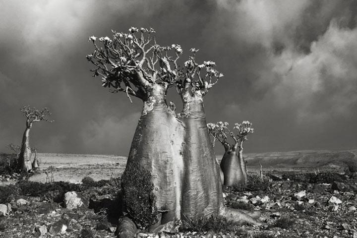 inkulte-ancient-trees-beth-moon-5