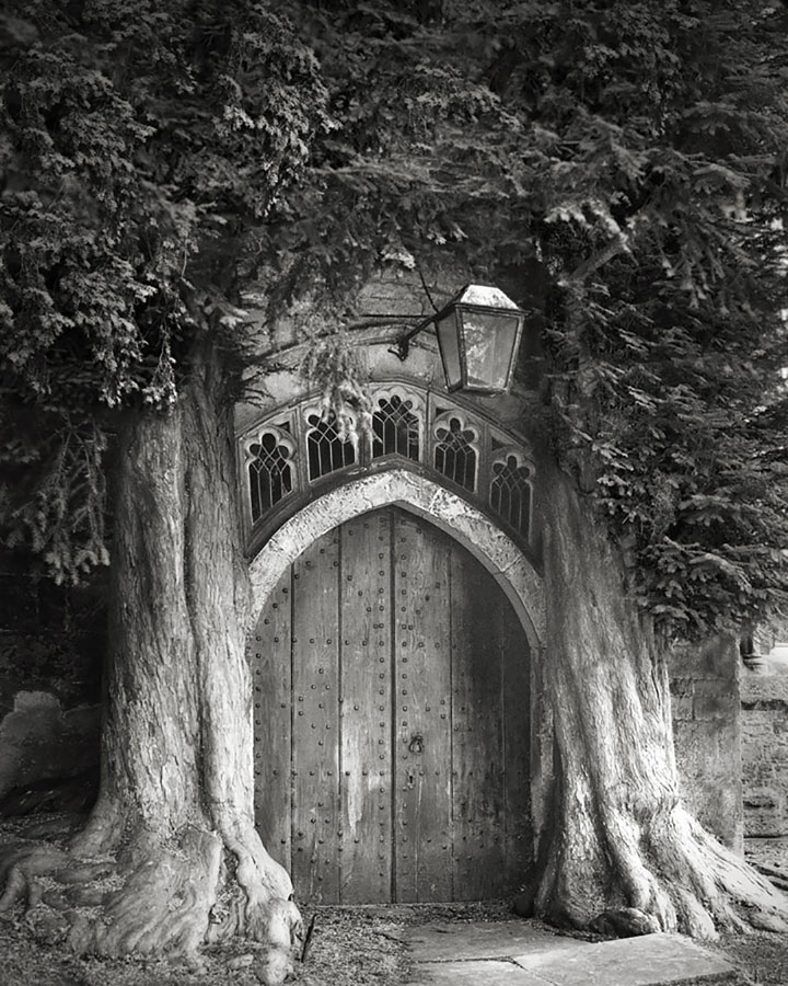 inkulte-ancient-trees-beth-moon-6