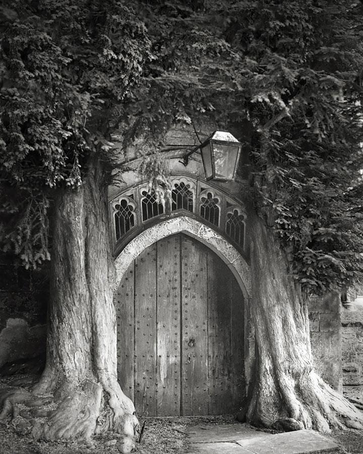 inkulte-ancient-trees-beth-moon-6