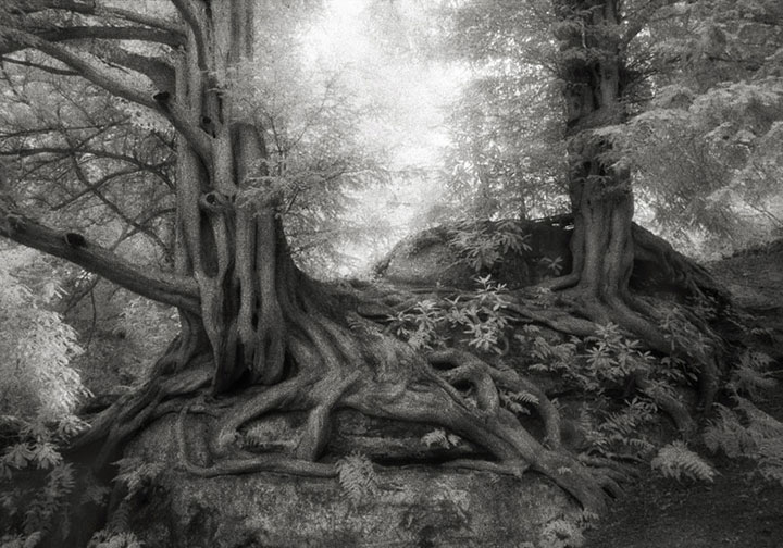 inkulte-ancient-trees-beth-moon-7
