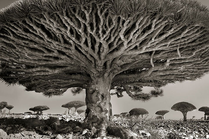 inkulte-ancient-trees-beth-moon-8