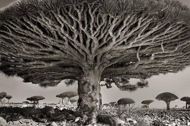 inkulte-ancient-trees-beth-moon-8