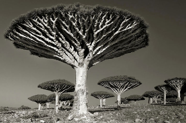 inkulte-ancient-trees-beth-moon-9
