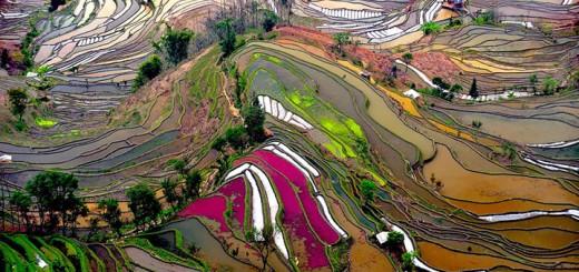 inkulte-terrasse-riziere-5