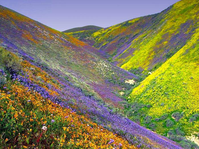 inkulte-Vallee-des-fleurs-Uttarakhand-en-Inde