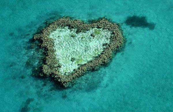 inkulte-arbre-coeur-love-11