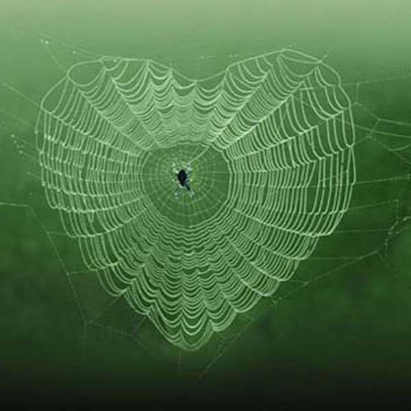 inkulte-arbre-coeur-love-12