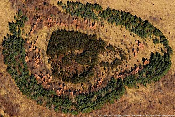 inkulte-arbre-coeur-love-19