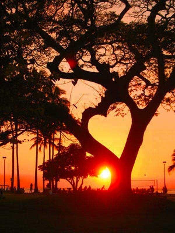 inkulte-arbre-coeur-love-2