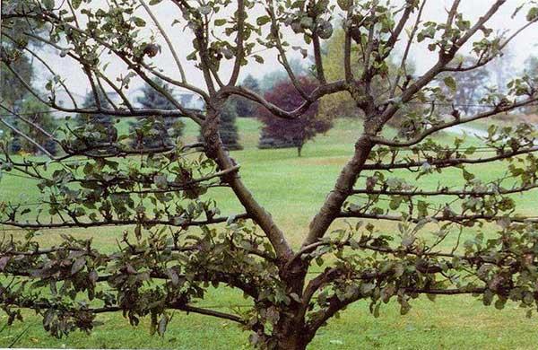 inkulte-arbre-coeur-love-3