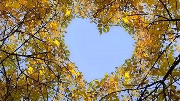 inkulte-arbre-coeur-love-4