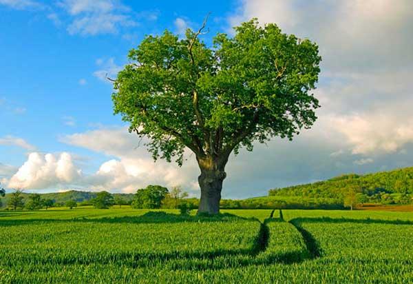 inkulte-arbre-coeur-love-5