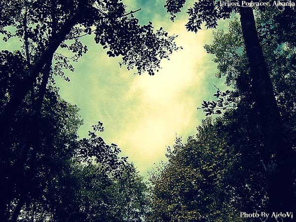 inkulte-arbre-coeur-love-9