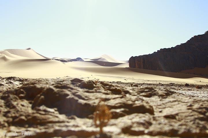 inkulte-sarah-tlili-desert